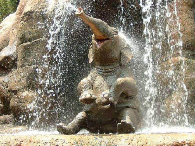 cute-baby-elephant-5