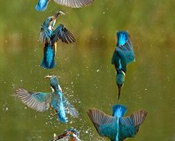 Kingfisher — A Beautiful Message for You Today?